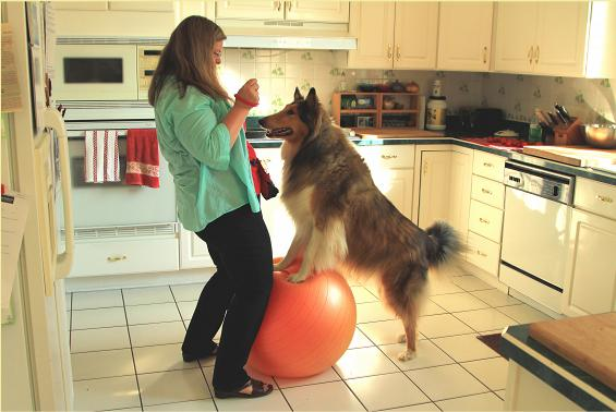 Jeni Grant, BA, CPDT-KA training Charlie to stand on a ball
